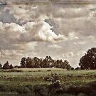 Vintage landscape by Kurt  Tutschek