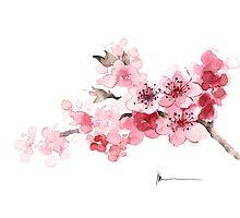 Cherry blossom branch watercolor art print painting by Joanna Szmerdt
