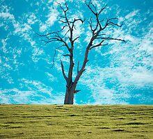 The Dead Trees of Strathalbyn #2 by AllshotsImaging