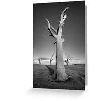 The Dead Trees of Strathalbyn #3 Greeting Card