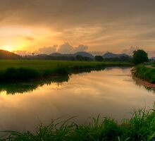 paddy field sunset scene by singlong