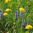 Summer Herbals by SmoothBreeze7