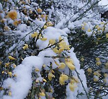 April Snow by julieburnaby