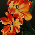 Tulips by Alison Howson