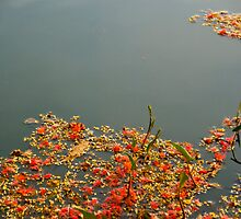 red flowers floating by singlong