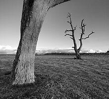 The Dead Trees of Strathalbyn #4 by AllshotsImaging