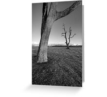 The Dead Trees of Strathalbyn #4 Greeting Card