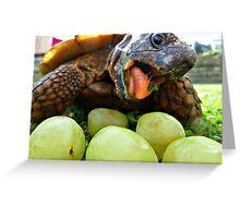 tortoise eating Greeting Card