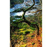Wharfedale Photographic Print