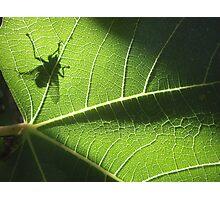 green gremlin Photographic Print