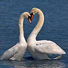Swans in Love by Krys Bailey