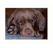 Cute Puppy Art Print