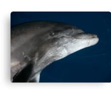 Dolphin Smile Canvas Print