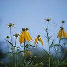 Yellow Flowers by Kathy Nairn
