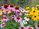 Field of multicolored flowers - Nature Photography by Barberelli by Barberelli