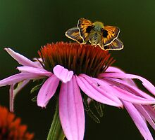 Skipper Showing Off by Lois  Bryan