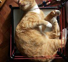 silly trapper cat wants to wrestle by Joymd