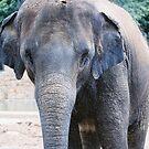 Elephant by Amber Finan