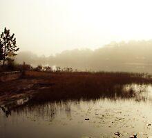Misty Morning by Rebecca Cruz
