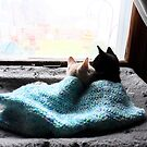 Lovey Dovey Cozy Kittens! by Barberelli