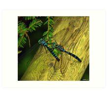 Dragon Fly Boogie Art Print