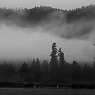 Misty Morning by Nikki Collier