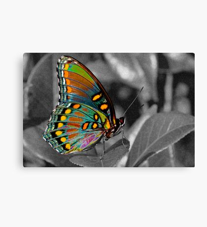 You brighten my day . . . Canvas Print