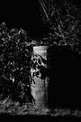 Bush Barrel by Jeremy Lavender Photography