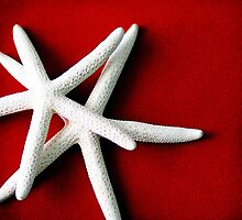 White Starfish by StarlingPhotos