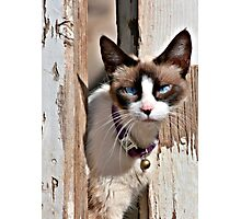 The Cat – A Purrrfect Carnivore Photographic Print