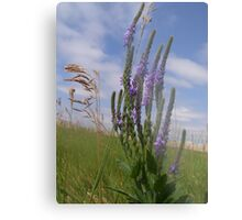 Prairie Winds Metal Print