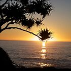 Pandanus Dawn by Andrew Carruthers