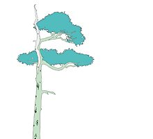 Bonsai Elder (Light Blue)  by sprucetree
