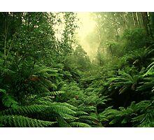 tree fern vista Photographic Print