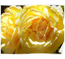 Matties Flower Poster