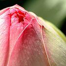 Pink Nipple Kiss by velveteagle