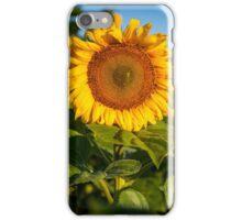 Sunflowers in North Dakota iPhone Case/Skin