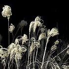 *Weeds Noir* by Darlene Lankford Honeycutt