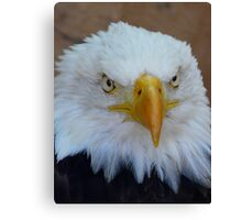 Eagle 3 Canvas Print