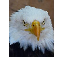 Eagle 3 Photographic Print