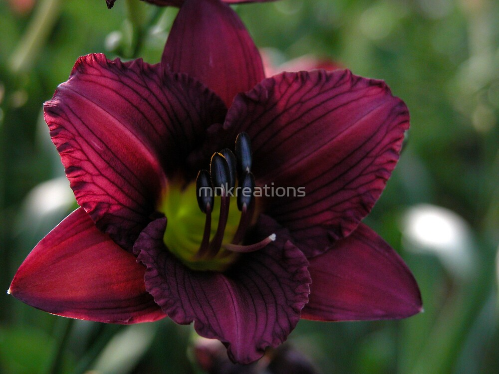Red Lilly by mnkreations