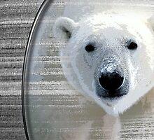 Polar by arteology