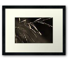 Dreamcatcher: Meteor Framed Print