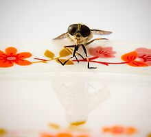 Fly Fishing by Nick Foster