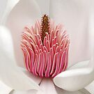 Magnolia by Brian Haslam