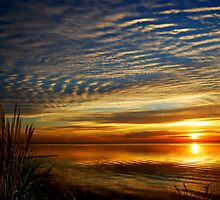 Morning Praise by Sandy Woolard