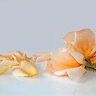 Fallen by Stephie Butler
