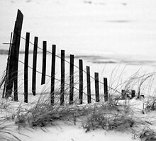 Dune Fence in Snow by CariAnne Slotterback