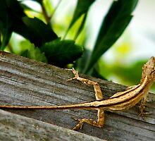 Lizard - Merritt Island, Florida by Ryan Houston