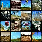 Through the Viewfinder Polyptych by Jules Campbell